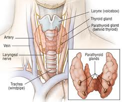 Hyperthyroidism Treatment