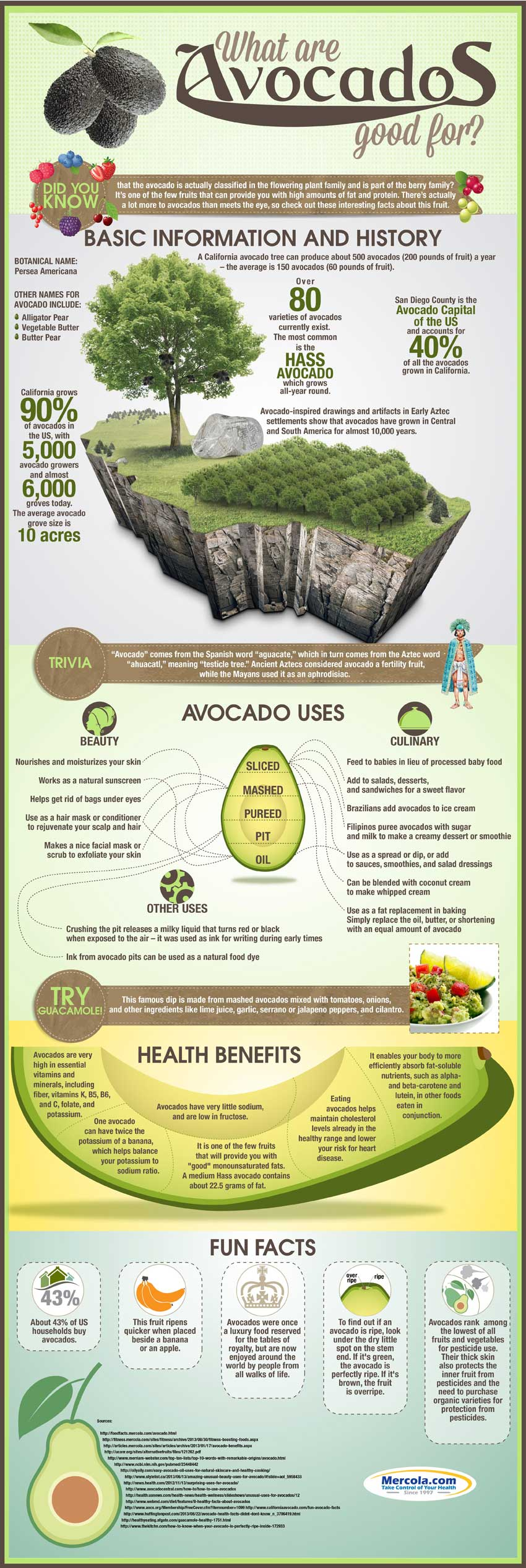 Avocado uses and Health benefits