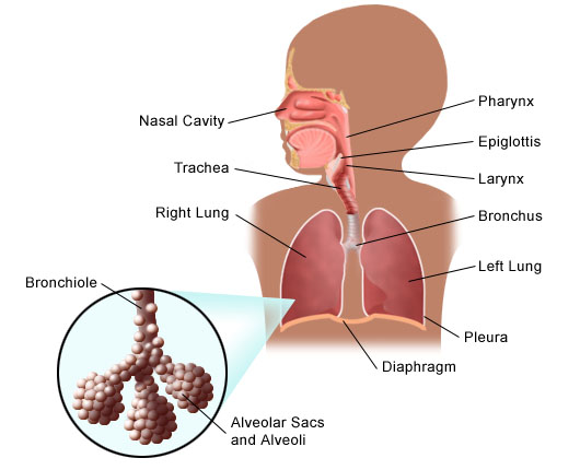 Pneumonia Symptoms & 5 Great Home Remedies For Pneumonia