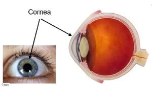 eyes_cornea