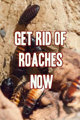 Best Way To Get Rid Of Kitchen Roaches