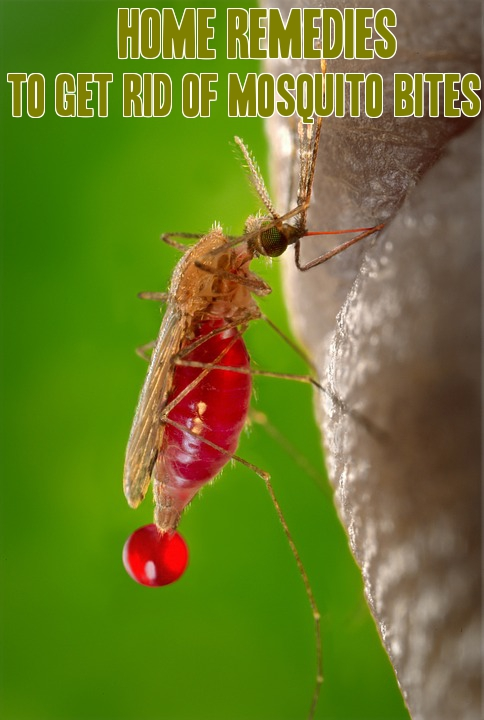 Home Remes To Get Rid Of Mosquito Bites Natural Repellents
