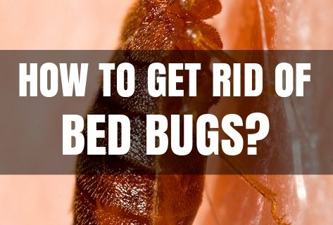 How To Get Rid Of Bed Bugs At Home?