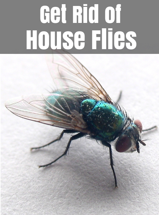 how to get rid of flies home remedies to control house fly. Black Bedroom Furniture Sets. Home Design Ideas