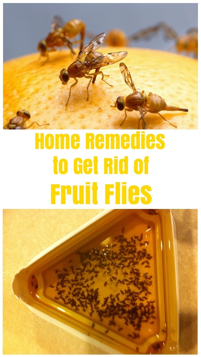 Home Remedies to Get Rid of Fruit Flies