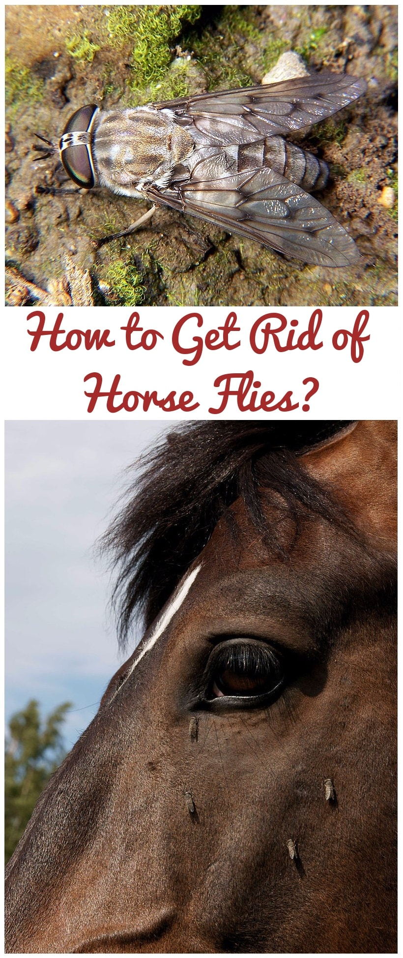 How to Get Rid of Horse Flies?