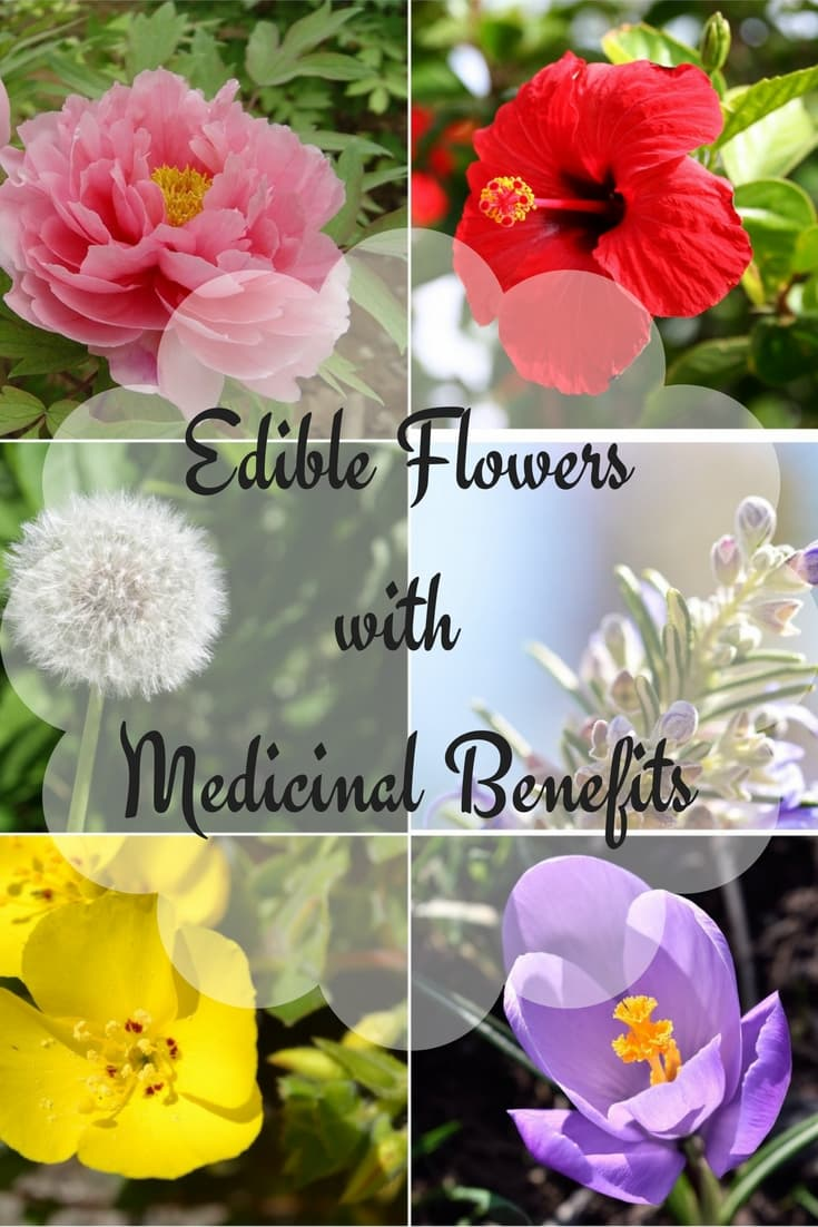 edible flowers with medicinal uses and benefits