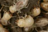 How to Kill Termites?