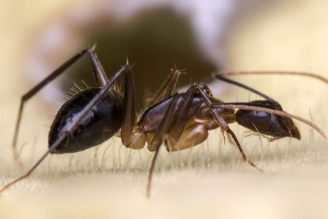 Get Rid of Carpenter Ants