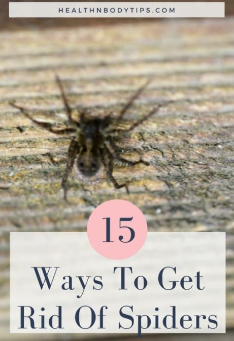 How to get rid of spiders 15 top ways to keep the for How to get rid of spiders in the house uk
