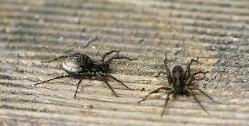 How to get rid of spiders 15 top ways to keep the for How to get rid of spiders in house