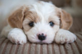 Home remedies for blood in dog stool