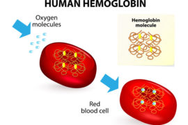 How to increase your hemoglobin level