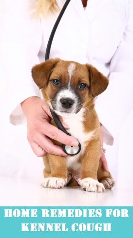 How to get rid of kennel cough