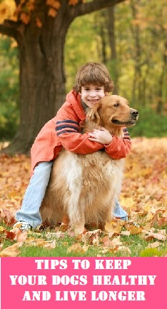 How to increase your pet dog's life