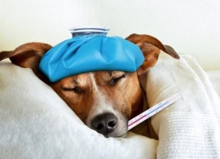How to get rid of vomiting in dogs